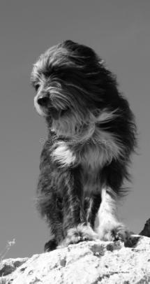 CHI_0240 - Chien / dog / canis lupus familiarisToulon, Var, France