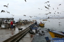 PAYSA_26279 - Port / Harbor _ Coquimbo, Chili, Amérique du sud
