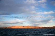 PAY_0698 - Puerto pyramides, Patagonie Chubut, Argentine, Amérique du Sud